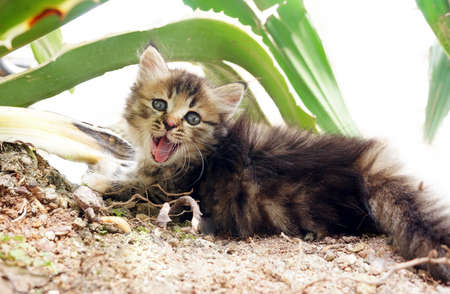 purr: Cute face small kitten on the isolated background Stock Photo