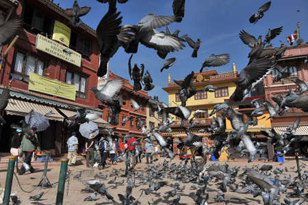A lot of crow flying in Nepal