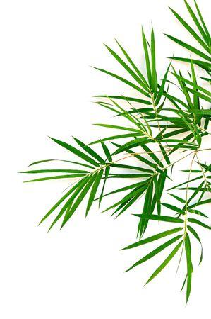 jungle green: bamb� deja aislada sobre fondo blanco  Foto de archivo