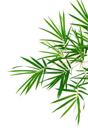 tropical border: bamboo leaves isolated on white background  Stock Photo
