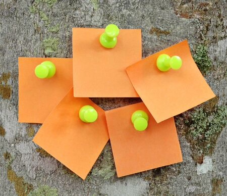 noteboard:  Blank memo notes pinned on cork notice board  Stock Photo