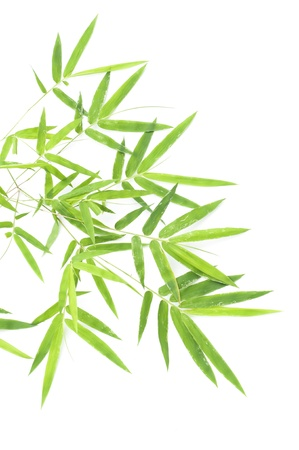 Bamboo leaves isolated on white background Stock Photo - 10507613