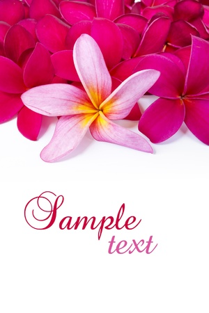 frangipani flower: Tropical flowers Stock Photo