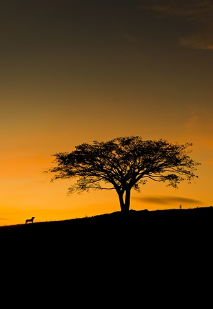 silhouette scenery of dog barking at tree standing upright in the middle of the grass field during sunset