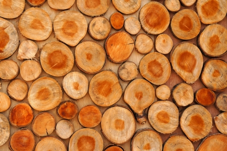tree stumps pattern