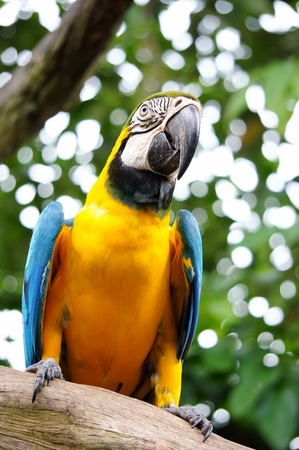 Beautiful parrot on bokeh background photo
