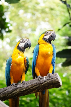 two beautiful parrot on bokeh background