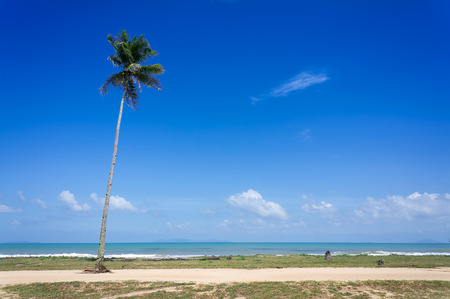 terengganu: Coconut palm and tropical beach Stock Photo