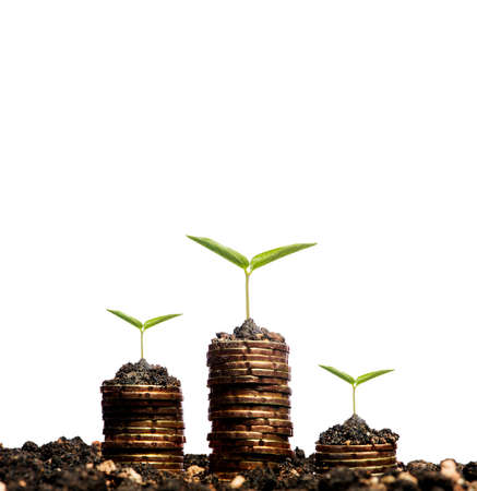 Financial growth concept,Golden coins in soil with young plant