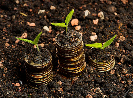 Financial Growth concept,Three seeds with coin in soil golden coin