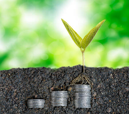 tenure: Growing seed with stacked coin-investment plan concept Stock Photo