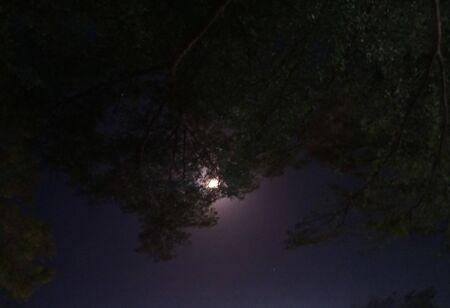 Moon 写真素材