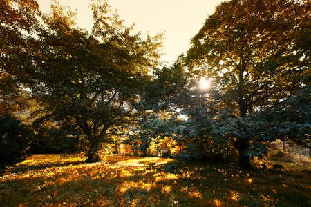 autumnally: Autumnally Landscape