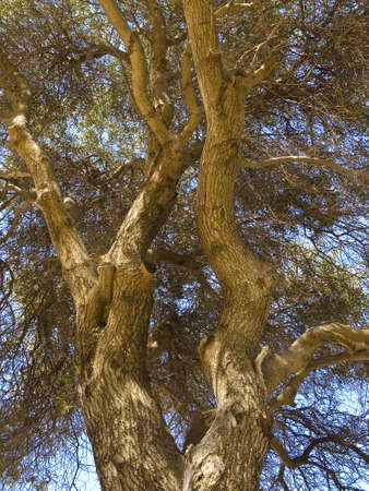 Close-up photo of an old tree. Stock Photo