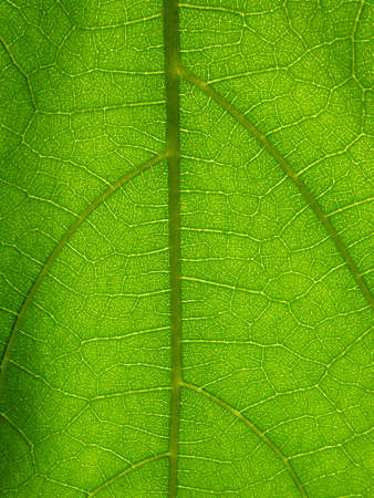 Microscopic view of a green plant leaf Stock Photo - 3512479