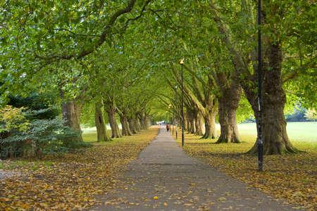 Un hermoso sendero bajo los árboles de Cambridge.