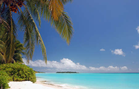 tropical maldivian beach with turquoise water, coconut palms and coral sand