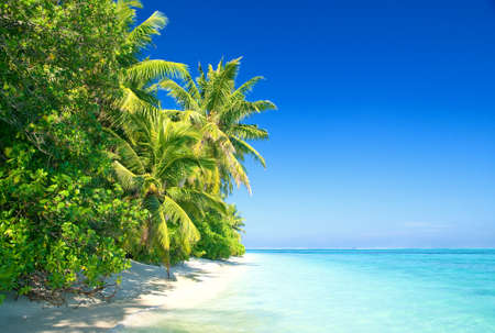 Tropical Beach with Coconut Palm Trees 版權商用圖片 - 9547578