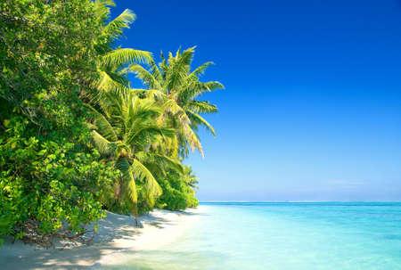 bahamas: Tropisch strand met kokospalmen