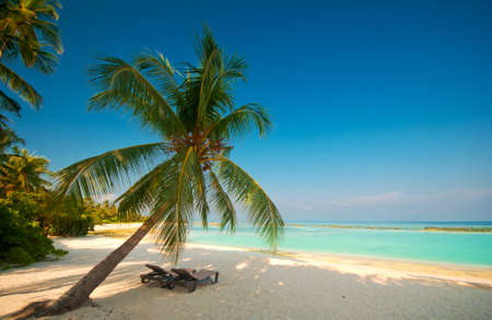tropical beach 版權商用圖片