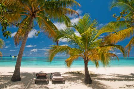 sunbeds: sunbeds on a beautiful tropical beach