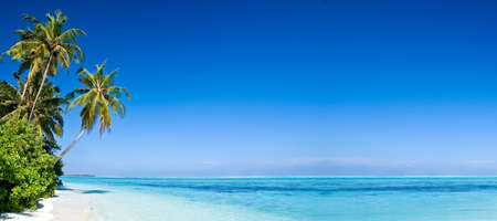 maldives: Tropical Beach with Coconut Palm Trees, panoramic view with much copyspace