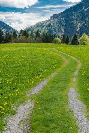 allgau: hiking path