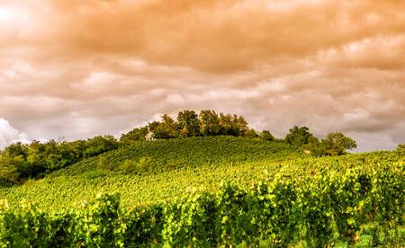 hessen: Sunset in a vineyard in Hessen Germany