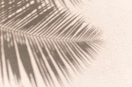 Palmblättern Schatten Hintergrund Standard-Bild - 36898627