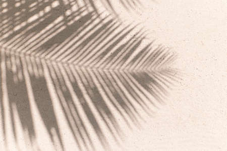 palm leaves shadow background Standard-Bild