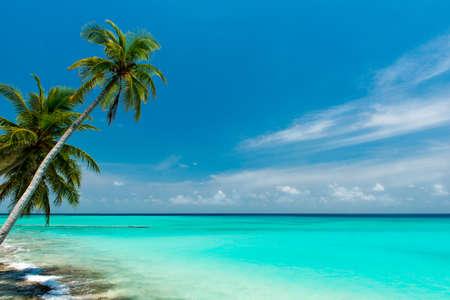 Tropischen Strand auf den Malediven Standard-Bild - 37338342