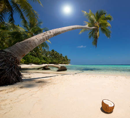 Beautiful beach with coconut palm tree on the maldives 版權商用圖片