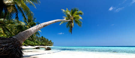 beautiful palm trees on an unspoilt beach