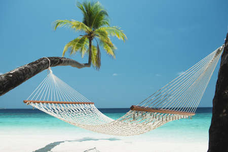 Beach Hammock between two palm trees on the maldives 版權商用圖片