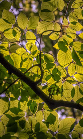 Branch, illuminated by the sun with a bright green foliage