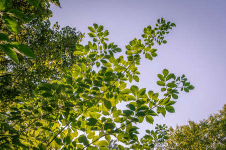 frondage: Branch, illuminated by the sun with a bright green foliage