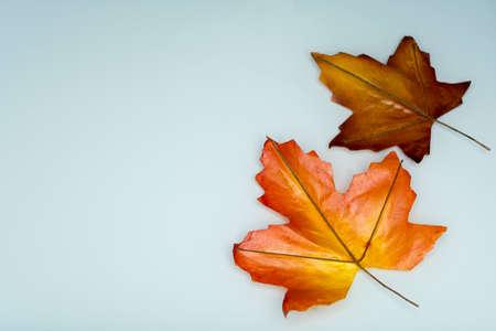 Orange maple leaf isolated on white. Autumn dry leaf. Stock Photo
