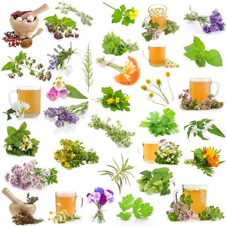 melissa: Set of fresh blooming medicative herbs, leaves, plants, isolated on a white background