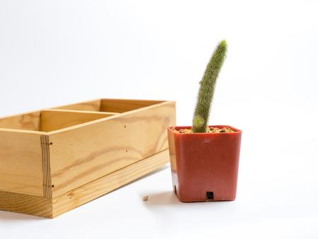 peyote: cactus in pot isolate on white background Stock Photo