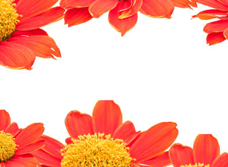 flowers background design pattern