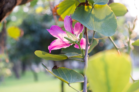bouquet of pink flower on tree, selective focus Stock Photo