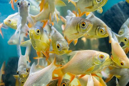 fresh water fish in aquarium, Fish Tank Stock Photo