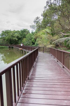 wood lot, forestry plantations near bangkok, thailand