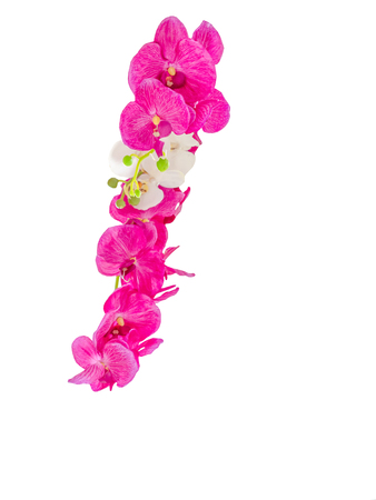 beautiful orchid flower, bouquet of orchid flower Stock Photo