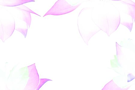 beautiful sweet color flower in blur style for background pattern texture