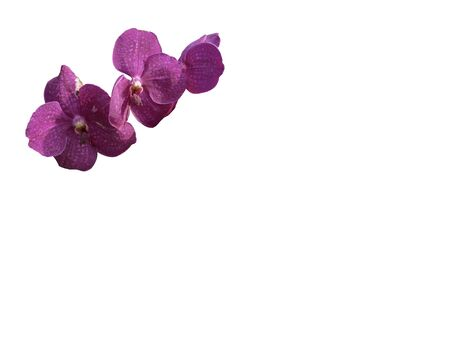 isolated orchid flower on white with path