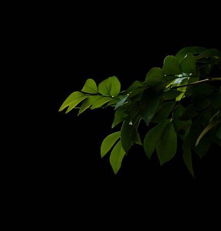 tree leaf on isolated black background