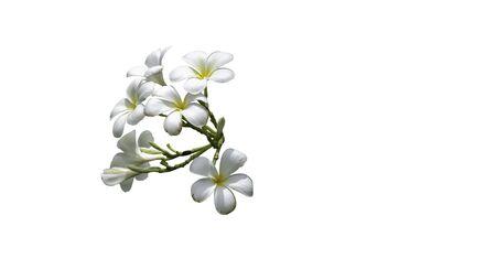 bouquet white plumeria with path Banco de Imagens