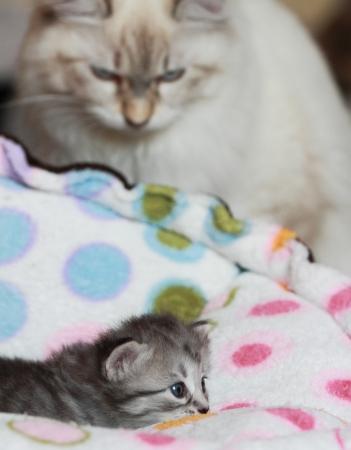 Cat and kitten photo