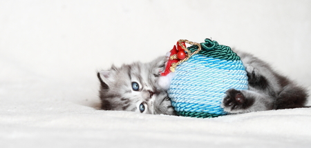 puppy of cat with Christmas decoration